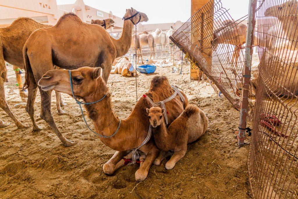 Mercado de Camelos