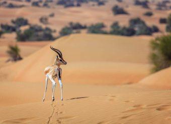 Natureza dos Emirados Árabes Unidos